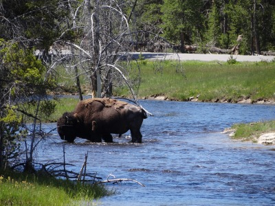 Special Tiere im Yellowstone und Grand Teton Nationalpark